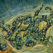 salamanders_sevret_pool