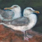 two_gulls_on_rocks
