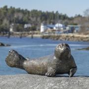 Raye-Owl-Seal-Rabbit-3-21_dsc3287