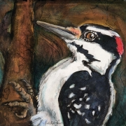 "Rebekah Raye-Sounds of the Hairy Woodpecker-ink watercolor 18""X18"".jpg"
