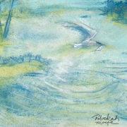 bird_over_pool