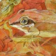 frogs_secret_pool