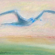 sea_gull_flying