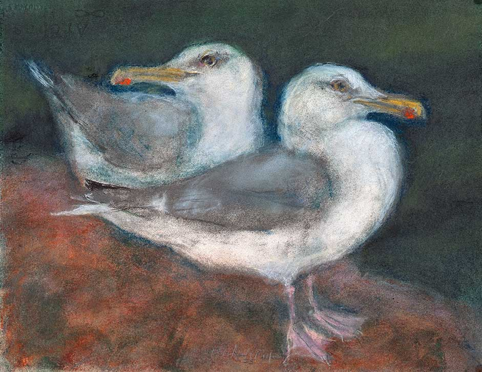 two_gulls_on_rocks